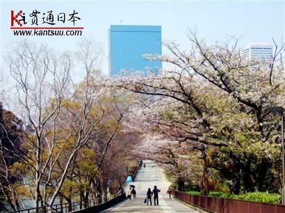 去日本赏樱花的时节到了