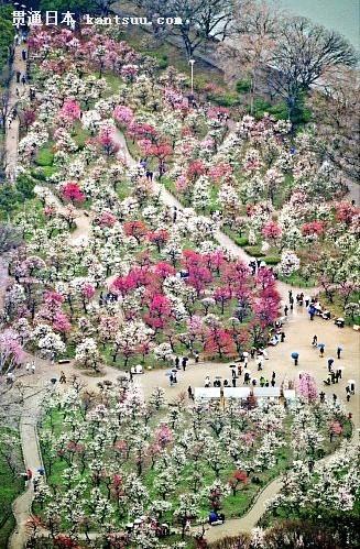 城 公園 梅林 大阪