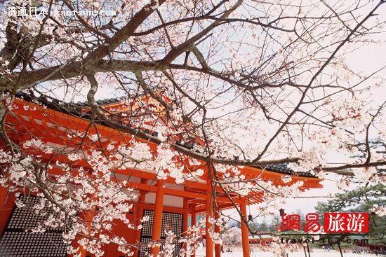 三月花见 从九州到奈良一路赏樱