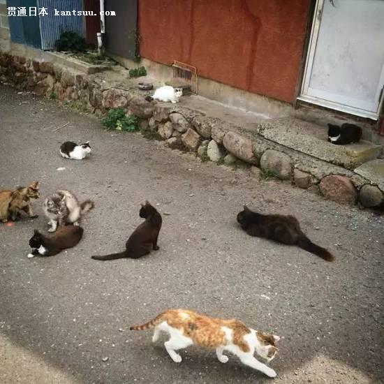 如果你是动物控的话,日本这些景点你不得不去