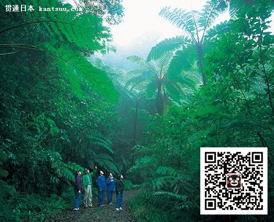 日本旅游攻略九州自由行景点:鹿儿岛的奄美大岛(照片来源:鹿儿岛县观光联盟)