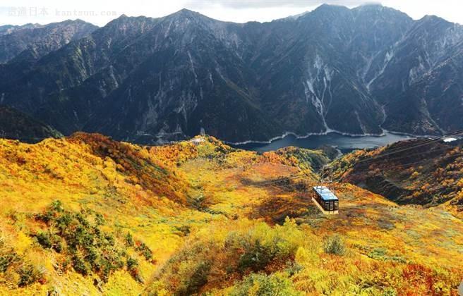 立山黑部四季各具风情,山谷在秋季满覆金黄地毯。(图/shutterstock提供)